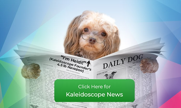 Daily Dog Orthopreneur Internet Marketing Solutions
